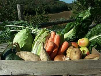 Mangiare green verdure