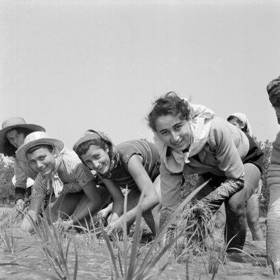 Mondine-al-lavoro-nei-campi-nei-dintorni-di-Binasco,-giugno 1951 (fotografia-di-Tino-Petrelli) (Archivio Publifoto Intesa Sanpaolo)