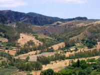 Biodiversità: alla ricerca di specie aliene nel Parco dell'Aspromonte