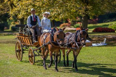 viaggio nel tempo Carrozze-a-cavalli