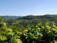 Paesaggio astigiano (credits Astiturismo)