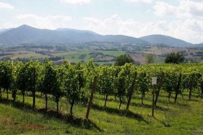Frasassi Experience Colline-del-Verdicchio