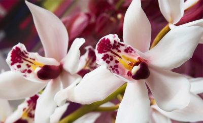 Sentiero-delle-orchidee