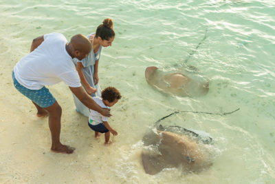 Sun-Aqua-Vilu-Reef-stingrey-feeding-2