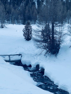 Alto-Adige perdersi tra i boschi (foto: federica gögele © mondointasca.it)