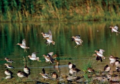 Piana-di-Sesto-Fiorentino-uccelli