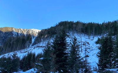 la-distruzione-degli-abeti-rossi (foto: federica gögele © mondointasca.it)