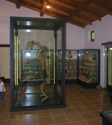 Museo-Paleontologico-Scheletro-di-orso