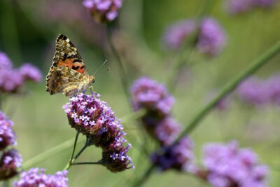 Farfalla-parco-sigurta