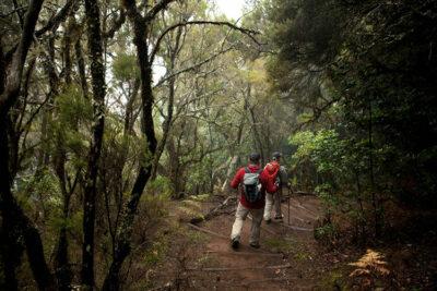 Escursione nel Parco Garajonay