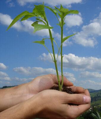 Giornata-mondiale-ambienteEcologia