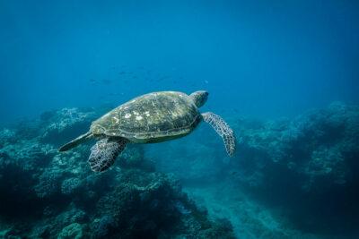 Movie-for-Nature-Blue_tartaruga