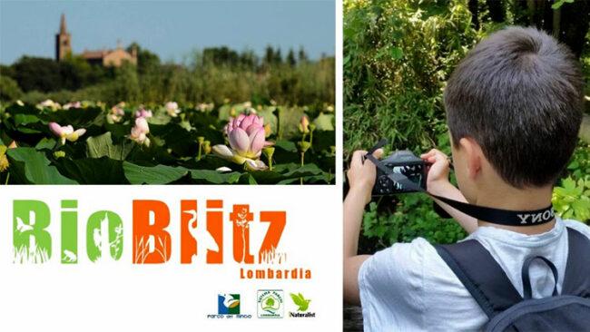 Bioblitz Lombardia 2020, la natura dei Parchi del Mincio