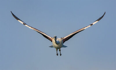 Hamad-Al-Kulaifi_Flamingos-QNTC