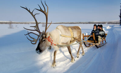 profondo nord Iso-Syöte_reindeerfarm