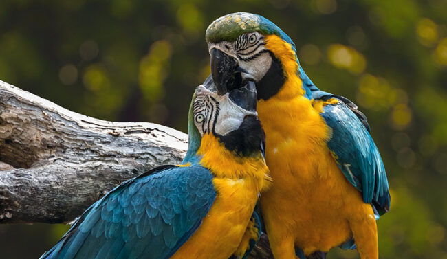 Corteggiamento e amori: San Valentino tra le specie animali