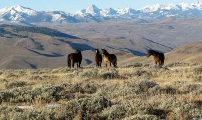 Mustang-2 (Foto @ BLM Idaho)