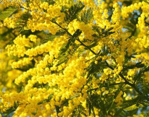 Festa della donna in giallo!