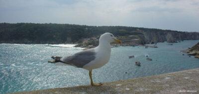 isole-tremiti-natura-uccello