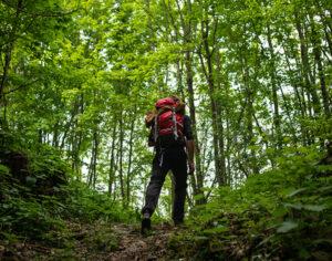 I boschi delle Valli del Natisone -Friuli Venezia Giulia (credits Sara Furlanetto)