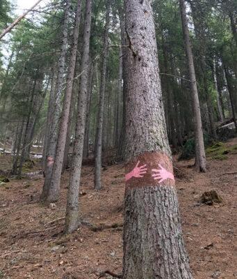 bosco-degli-abbracci-@alessandra_fusè--