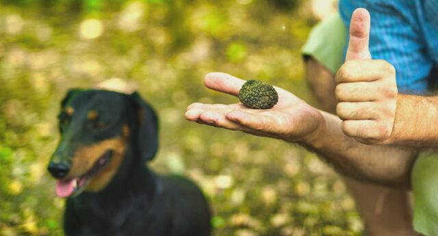 Insegnare al tuo cane come cercare tartufi