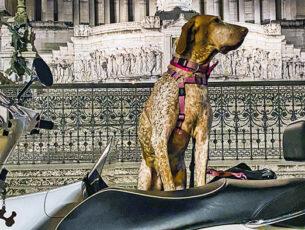 Cinque insolite esperienze da fare con il cane
