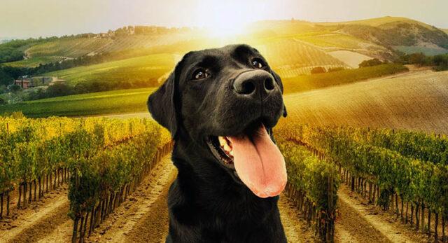 Nelle cantine Dog Friendly di Pisa