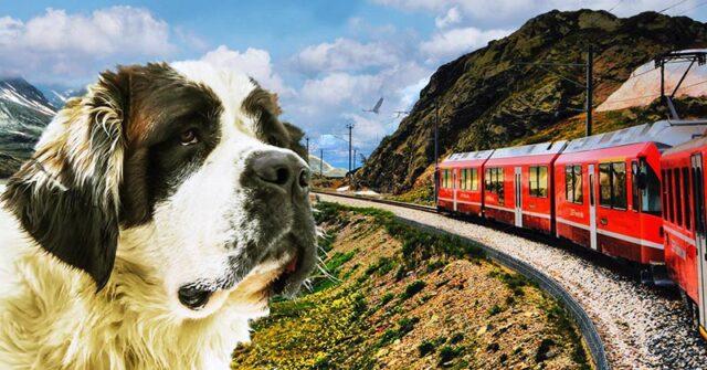 Sul trenino rosso del Bernina con l'amico a quattro zampe