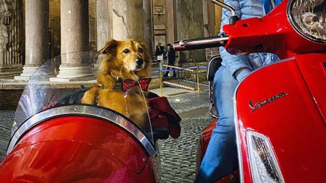 In giro per Roma in sidecar con il cane