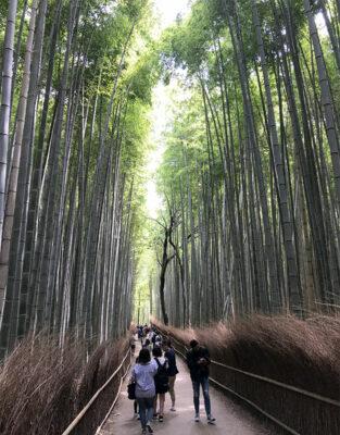 Foresta-di-bambù-di-Arashiyama (ph. b. andreani © mondointasca.it)