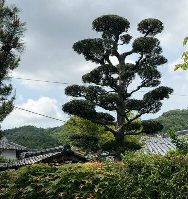Lungo-il-fiume-Katsura-ad-Arashiyama