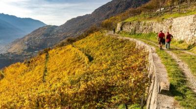 Via-Dei-Terrazzamenti-Valtellina