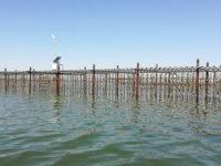 Impianto per la colticazione delle ostriche speciali (foto p.ricciardi © mondointasca.it)