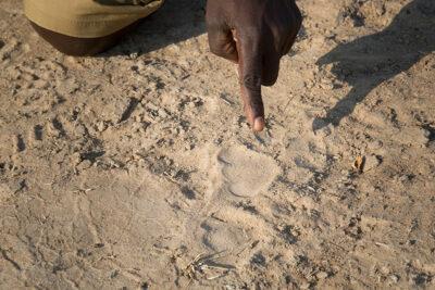 safari a piedi Remote-Africa-copyright-Scott-Ramsay