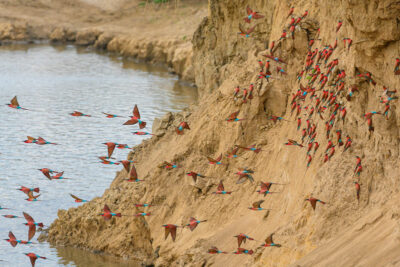 safari a piedi uccelli in volo ph-Jen-Pics