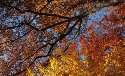 Foliage-in-Molise Bosco di Prato Gentile