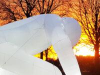 """Light Festival Gent 2021,""""Fantastic Planet"""" di Amanda Parer"""