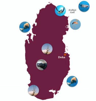 Mappa-degli-animali-in-Qatar
