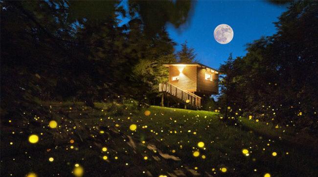 Parco del Grep, casa Pineta, esterno notte