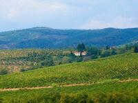 Quarrata, vigneti nelle colline di Montalbano (foto © emilio dati – mondointasca.it)