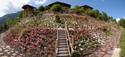Roseto-più-alto-d'Europa-credit-hotel-Tyrol