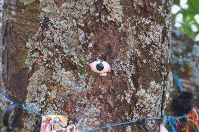montagne-pistoiesi-albero-con-gli-occhi-di-Terzani